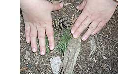 montanas-y-bosques_2